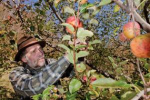 heritage apples © Renee Rosensteel