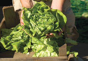 Community Supported Agriculture © Thinkstock