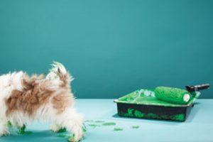 greener pet care