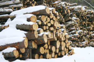 Sustainable ForestryWith a Chainsaw?