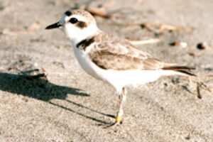 Pombo Bill to Gut Endangered Species Act Clears First Hurdle