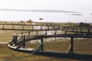 Open Aquaculture