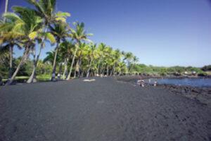 For Hawaiian Sea Turtles, A Last Resort?