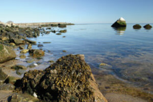 Saving the Sound The Northeast's Vital Estuary is in Recovery