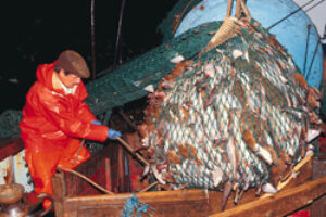 White House Joins International Call for Ban on Deep Sea Trawling