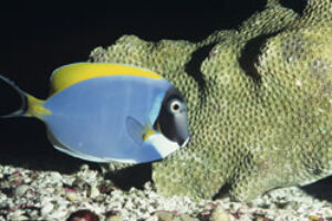 COMMENTARY: Reefs in Peril