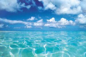 Human Impacts on Ocean: Shocking